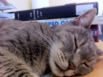 paco sleep